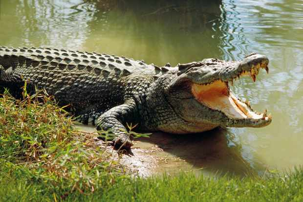Riverbend Crocodile Farm via Facebook