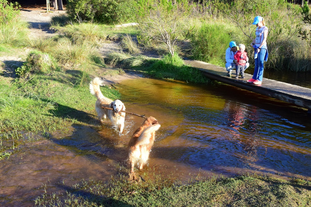 Top 10 Pet-friendly Activities in Cape Town