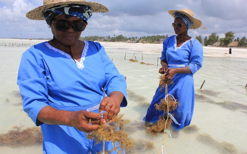 Top Eco-Friendly Activities to do in Zanzibar