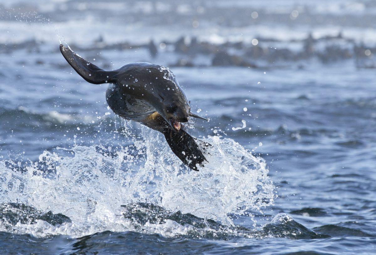 sealsnorkeling.com