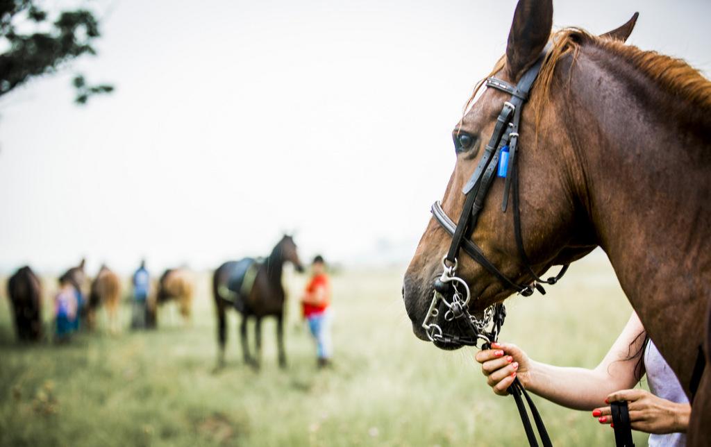 horseandtrails.co.za