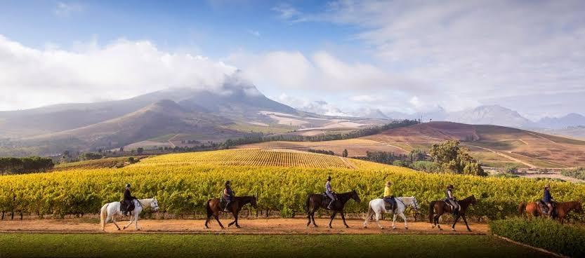 Cape Winelands Riding
