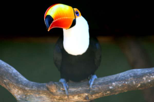 umgeni-bird-park-5