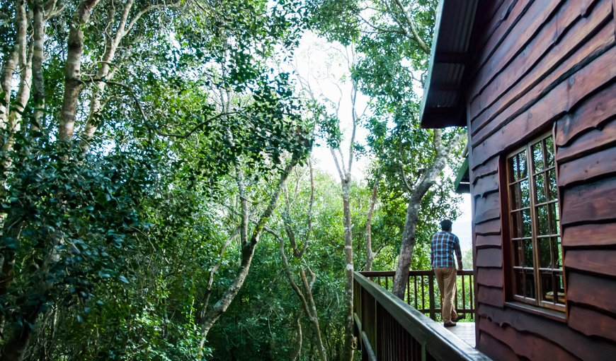 Tree Frog Forest Cabin in The Crags, Plettenberg Bay, Western Cape , South Africa