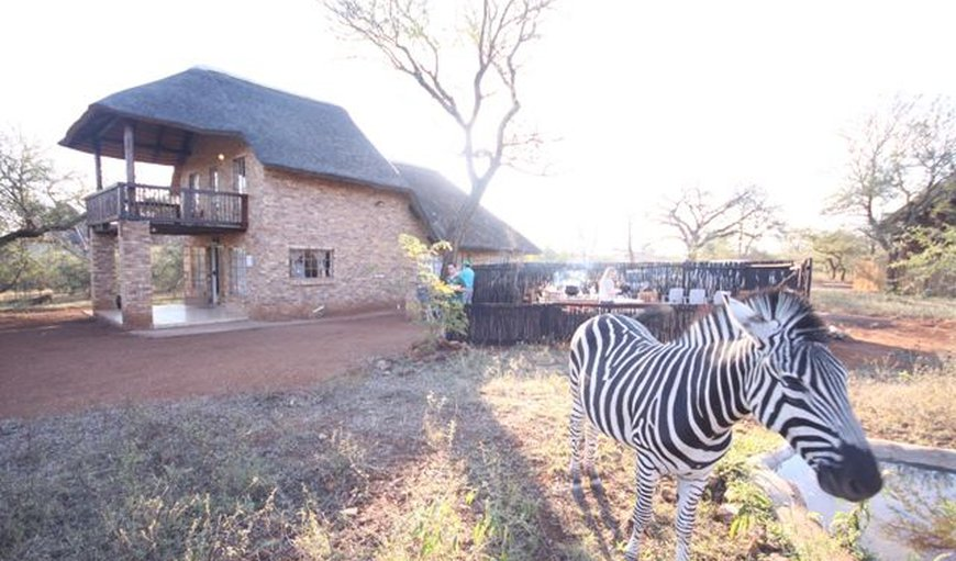 Welcome to Walking Tall Self-catering Lodge in Marloth Park, Mpumalanga, South Africa