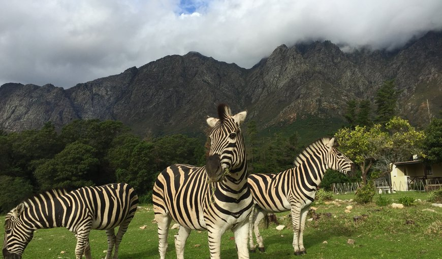 Franschhoek Country Cottages in Franschhoek, Western Cape , South Africa