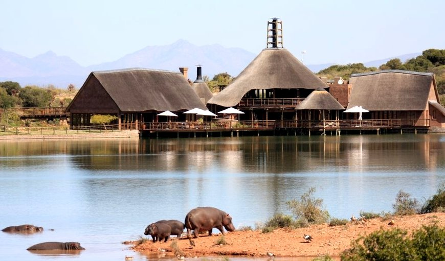 Buffelsdrift Game Lodge in Oudtshoorn, Western Cape , South Africa