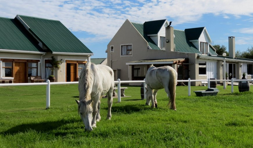 T'Niqua Stable Inn in Harkerville, Plettenberg Bay, Western Cape , South Africa