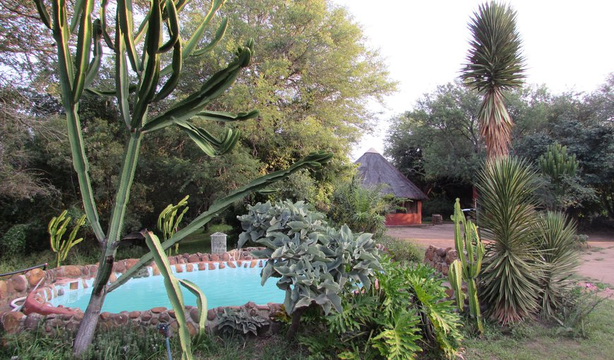 Our splash-pool with the rondawels in the background. in Thornybush Nature Reserve, Mpumalanga, South Africa
