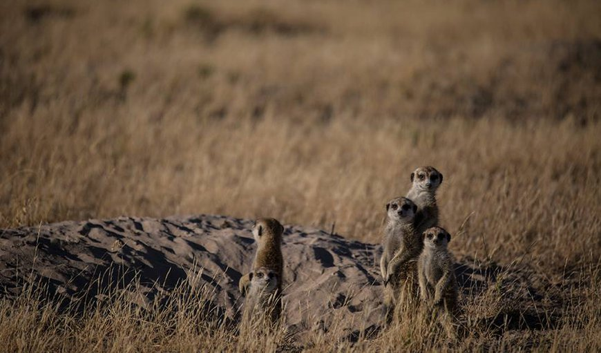 Travel deep into the saltpans to experience a vast, open lifeless land and go looking for Meerkats warming themselves in the morning sun.  Minimum 3 night stay between June to October required to participate.