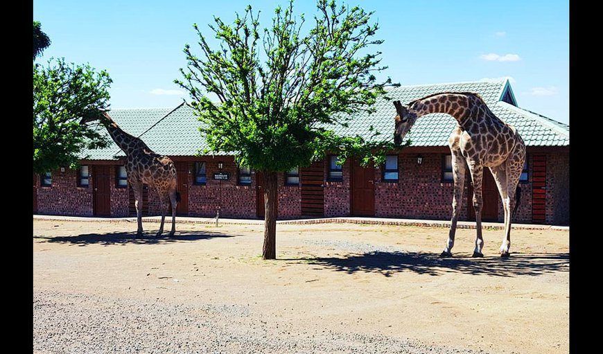 Sangiro Lodge in Bloemfontein, Free State Province, South Africa