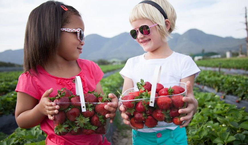 Redberry Farm is situated on a strawberry farm.