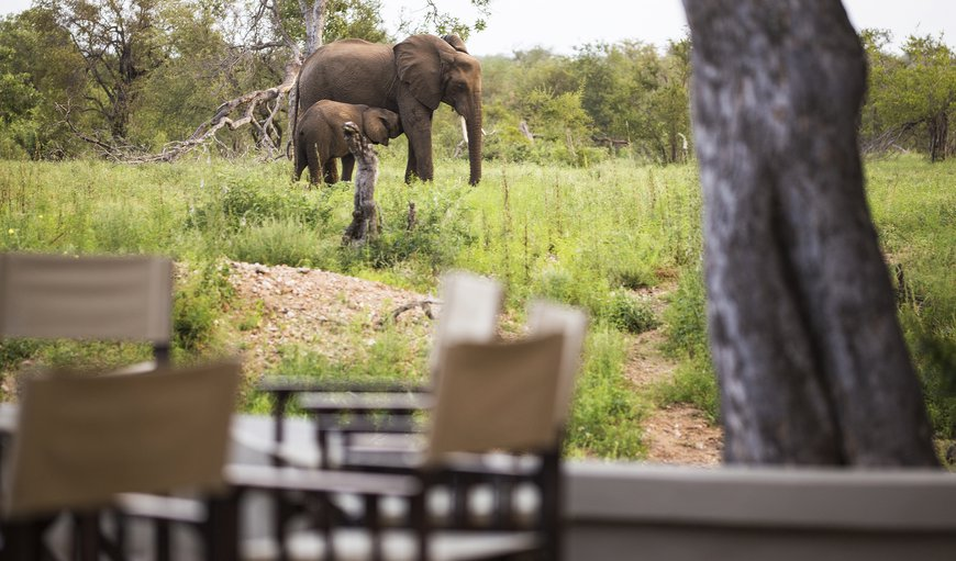 Amani Safari Camp in Klaserie Private Nature Reserve, Limpopo, South Africa