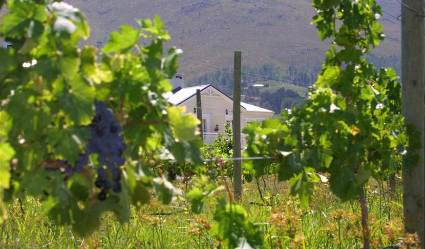 Surrounded by vineyards in Franschhoek, Western Cape , South Africa