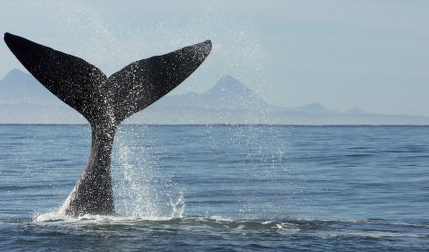 Whale watching from June to November