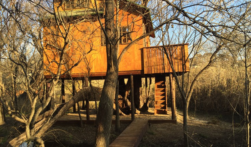 Willow Nest Treehouse in Fourways, Johannesburg (Joburg), Gauteng, South Africa