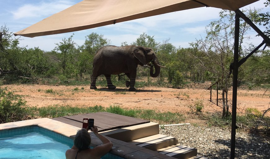Game viewing from the comfort of your own pool