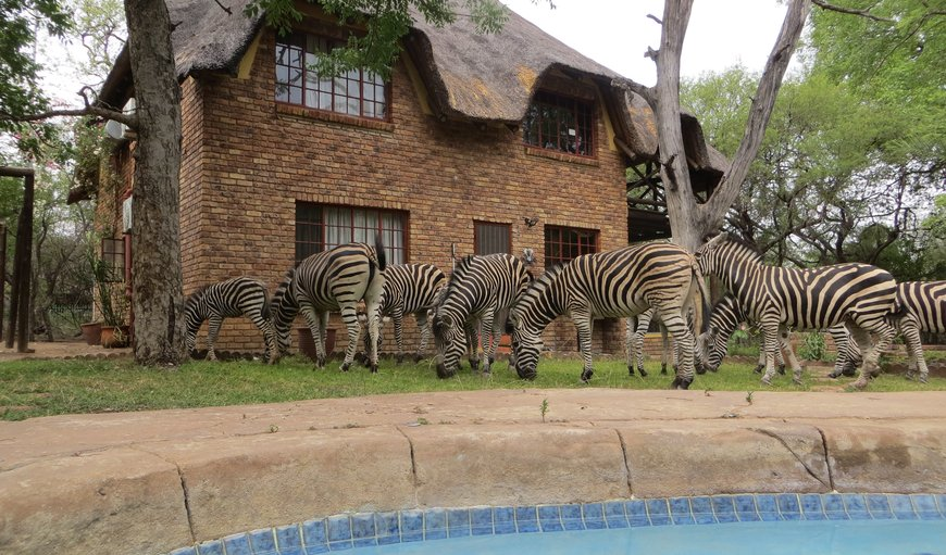 Rafiki's Resthouse in Marloth Park, Mpumalanga, South Africa