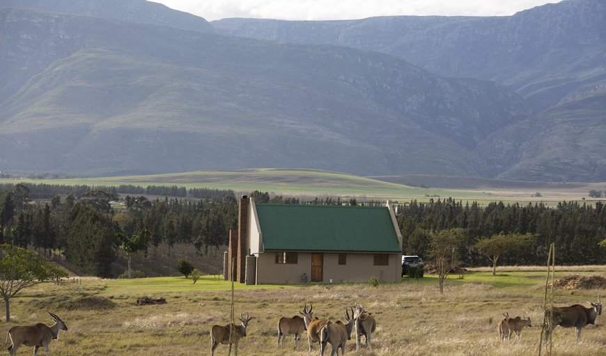 Back view of Springbok cottage in Buffeljagsrivier, Swellendam, Western Cape , South Africa