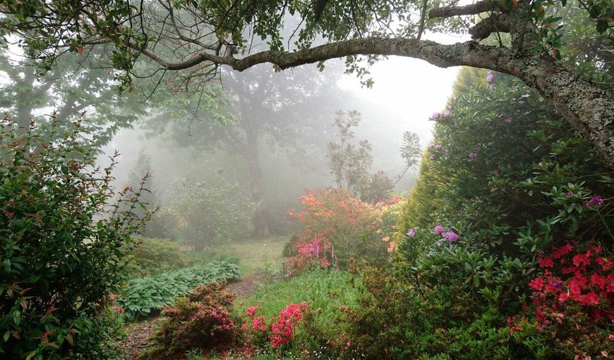mystical garden in Hogsback, Eastern Cape, South Africa