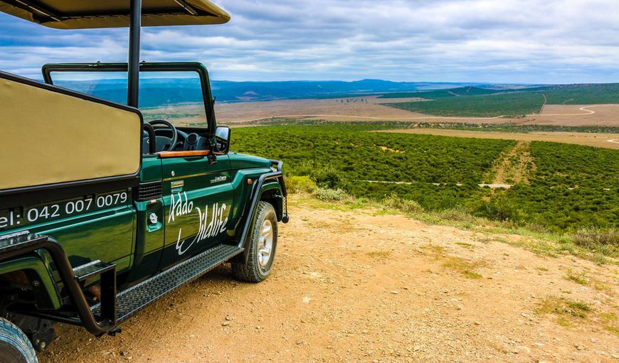 Addo Wildlife in Addo, Eastern Cape, South Africa