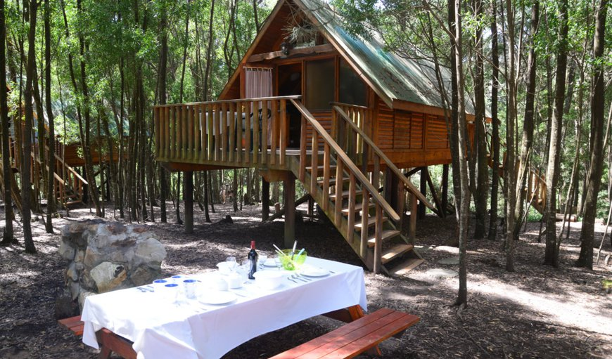 Welcome to Plett Forest Cabins  in Harkerville, Plettenberg Bay, Western Cape , South Africa