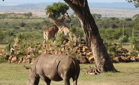 Amaka Private Game Reserve & Safaris image