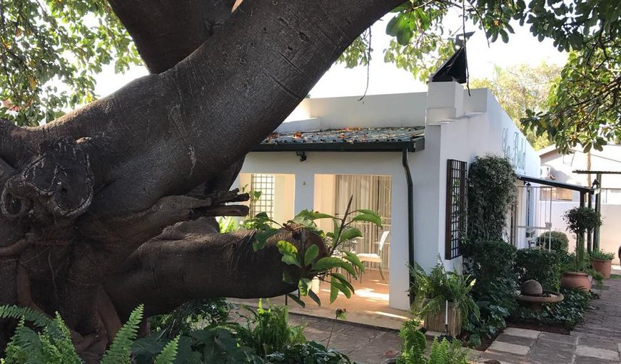 Welcome to La Bella B&B Under the Fig Tree in Bela Bela (Warmbaths), Limpopo, South Africa