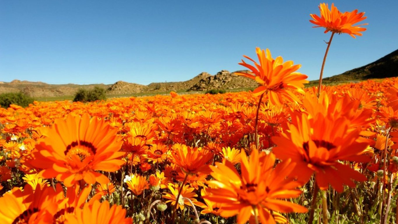 Springbok Caravan Park in Springbok — Best Price Guaranteed