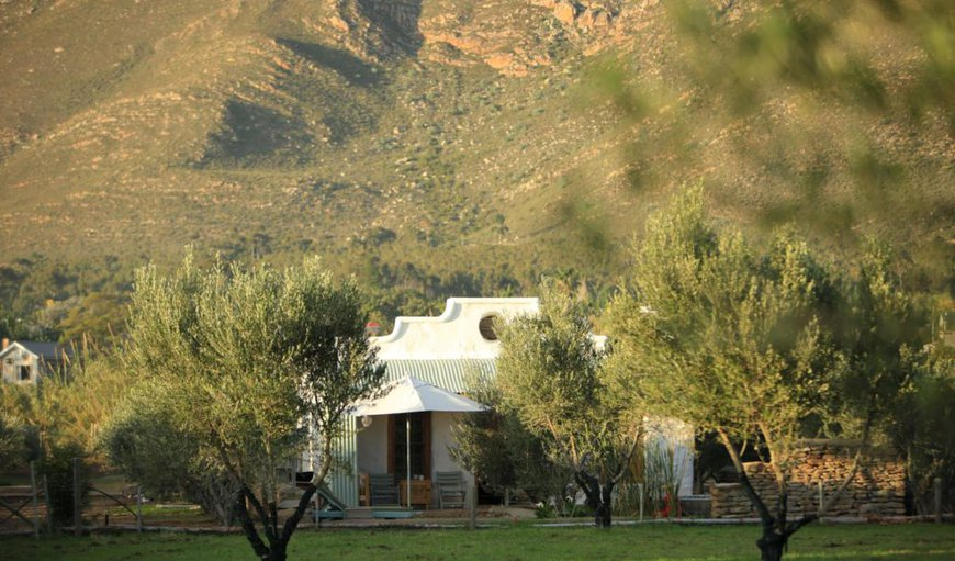 Olive Stone Farm Cottage in Montagu, Western Cape, South Africa