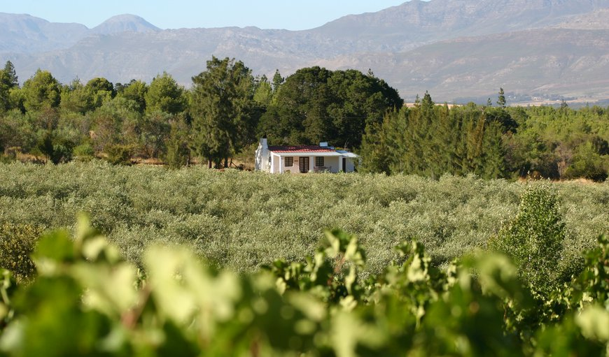 Mountain ranges, views of vineyards and Olive groves, that is what you will have when you stay at Fraaigelegen Farm, Tulbagh. in Tulbagh, Western Cape, South Africa