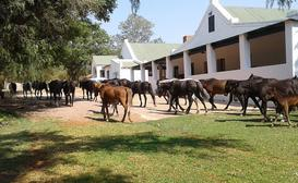 Thandile Country Lodge image