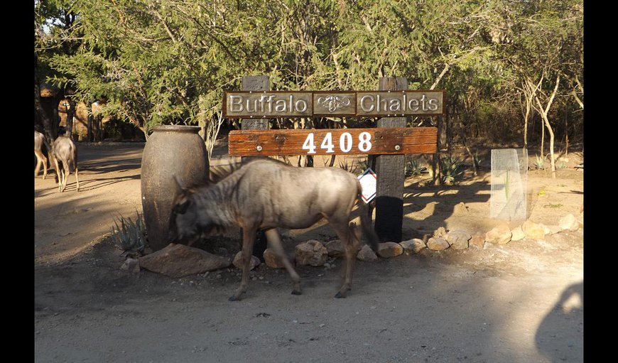 Welcome to Buffalo Chalets Marloth Park. in Marloth Park, Mpumalanga, South Africa