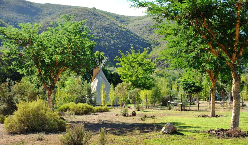 Welcome to Lancewood TiPi Lodge in Robertson, Western Cape, South Africa