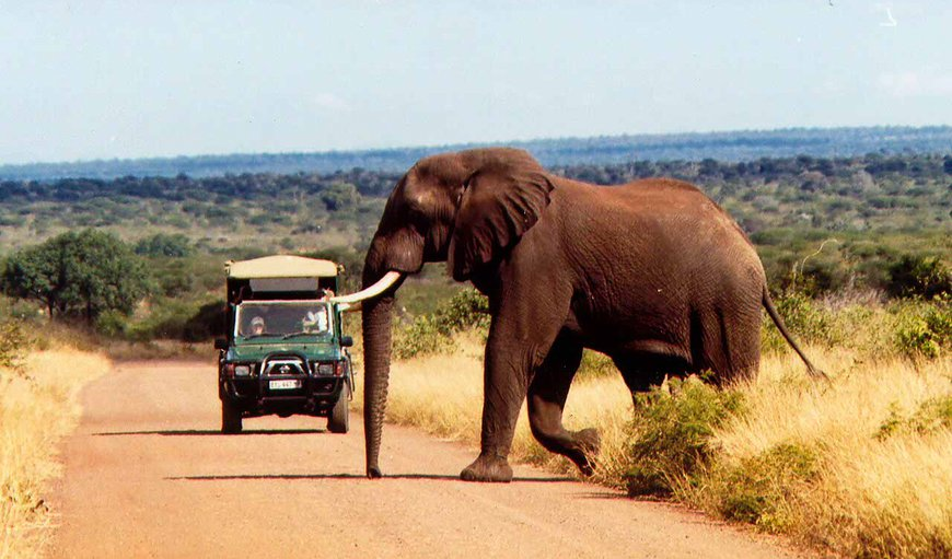 Lovely elephant bull with our open safari vehicle at the back