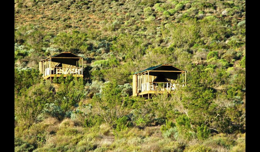 Welcome to Agama Tented Camp. in Garies, Northern Cape, South Africa