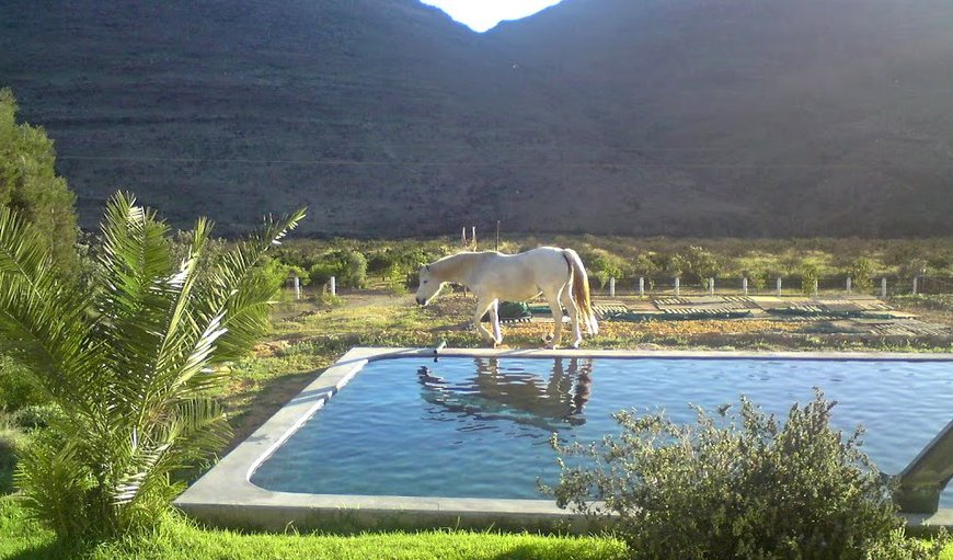 Jamaka Organic Farm in Citrusdal, Western Cape , South Africa