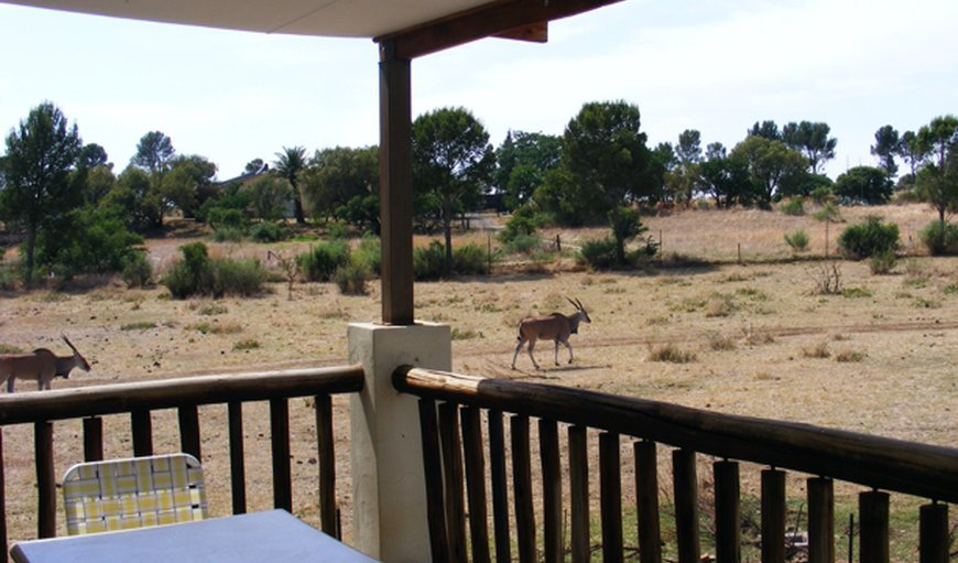 Welcome to Oppi-Koppi Lodge! in Kroonstad, Free State Province, South Africa
