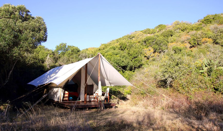 Quatermain's 1920's Safari Camp Double Tent in Paterson, Eastern Cape, South Africa