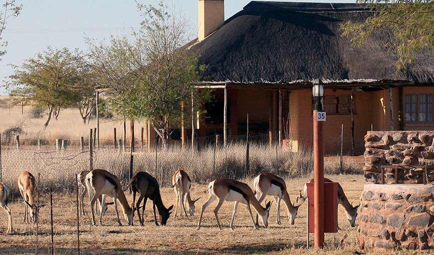 Welcome to Kalahari Monate Lodge in Upington, Northern Cape, South Africa