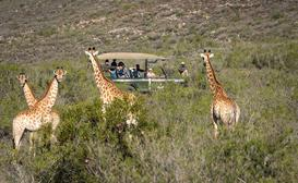 Melozhori Game Reserve image