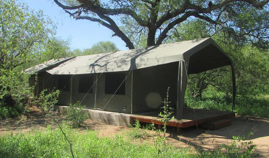 Welcome to the stunning Mzsingitana Tented Camps in Hoedspruit, Limpopo, South Africa