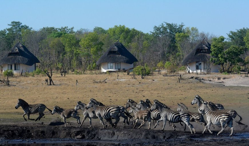 Sable Sands in Hwange National Park , Matabeleland North, Zimbabwe