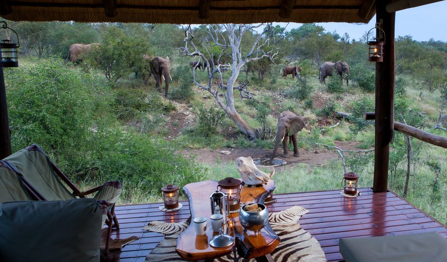 Ximongwe Safari Camp