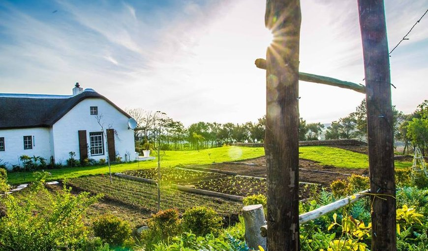 Welcome to Anna Beulah Farm Accommodation  in Durbanville, Cape Town, Western Cape , South Africa