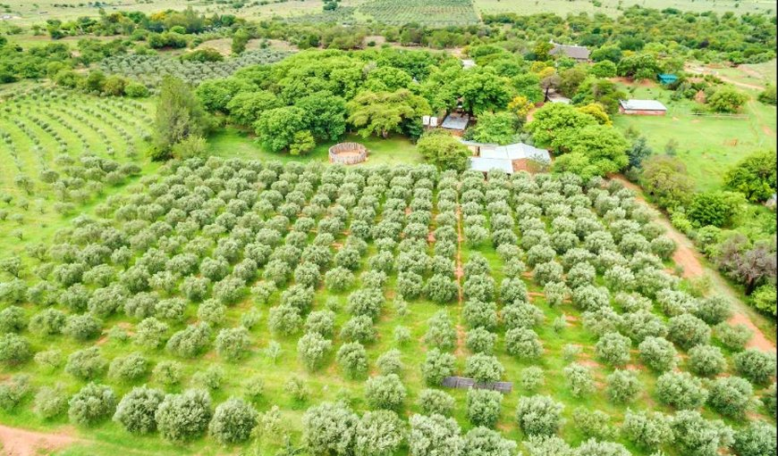 Mkholo Olive Farm Arial view