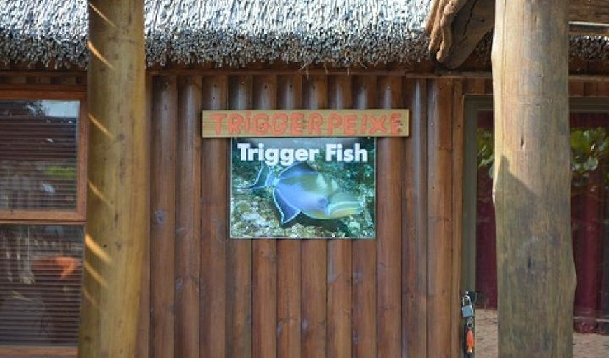 Trigger Fish @ Cova & Reolize Lodge in Marracuene, Maputo Province, Mozambique