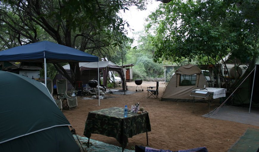 Camping under shady indigenous trees