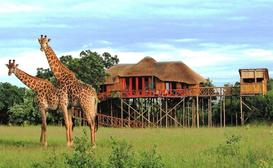 Pezulu Tree House Game Lodge image