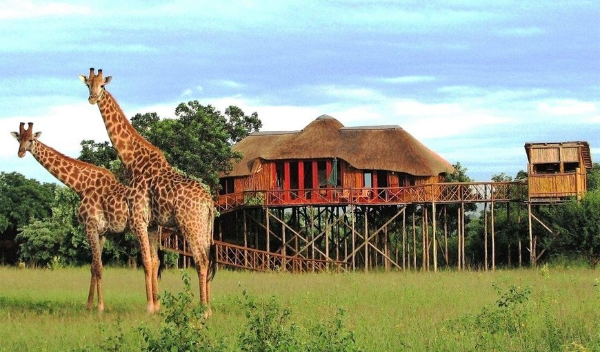 Dream Tree House in Hoedspruit, Limpopo, South Africa
